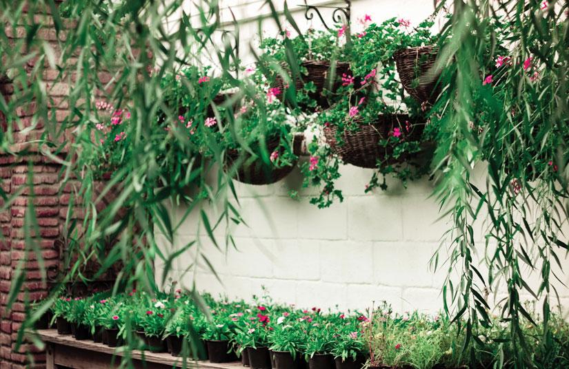 Trucos para decorar tu hogar con plantas colgantes - Plantas colgantes interior ...