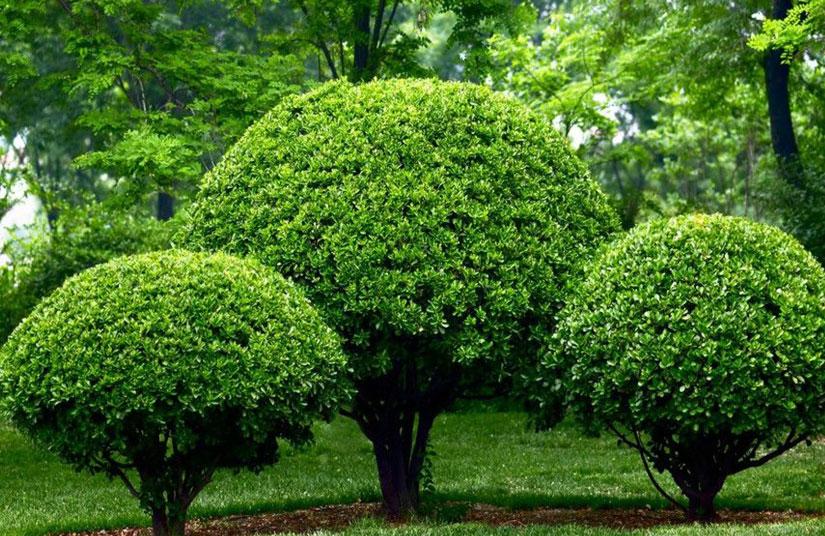 10 plantas en granada que mejor se cultivan agrogojar for Viveros en granada