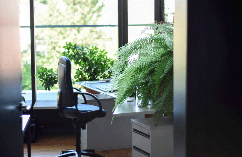 14 plantas para oficina o escritorio agrogojar viveros for Plantas decorativas para oficina