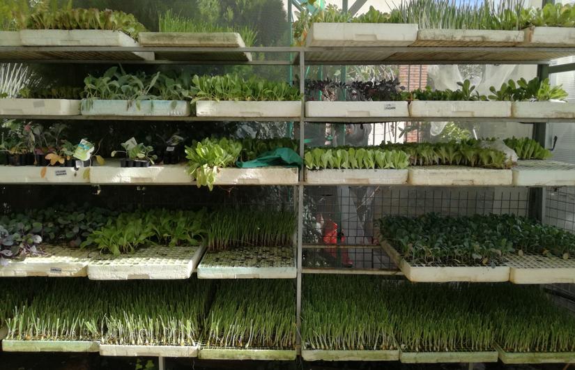 verduras que plantar en diciembre